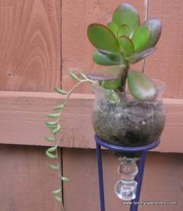 Candle holder mini succulent garden