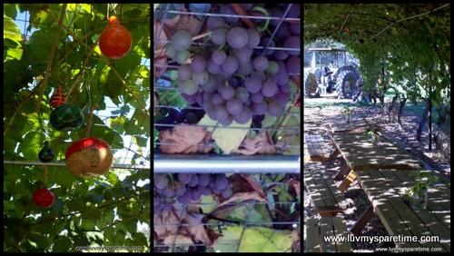 Gourd Art Grape Arbor Decor