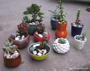 DIY mini succulent potted gardens