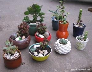 DIY mini succulent potted gardens