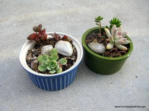 DIY mini succulent garden pots
