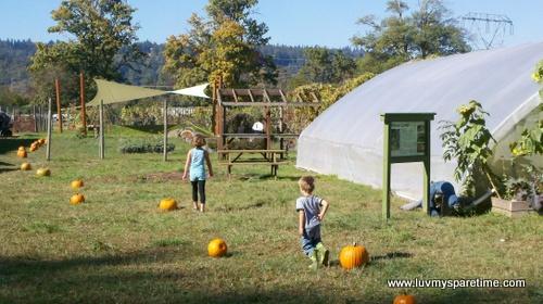 Oxbow Organic Farm Duvall WA