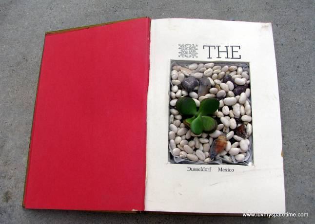 succulent garden in a book