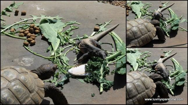 santa barbara zoo lizard and turtle battle