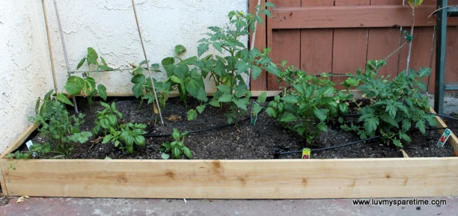 DIY Garden box with vegtables