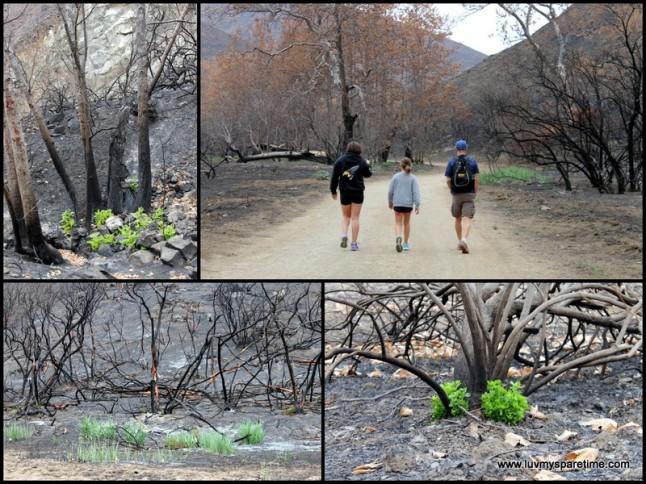 Sycamore Canyon Hike Ventura County